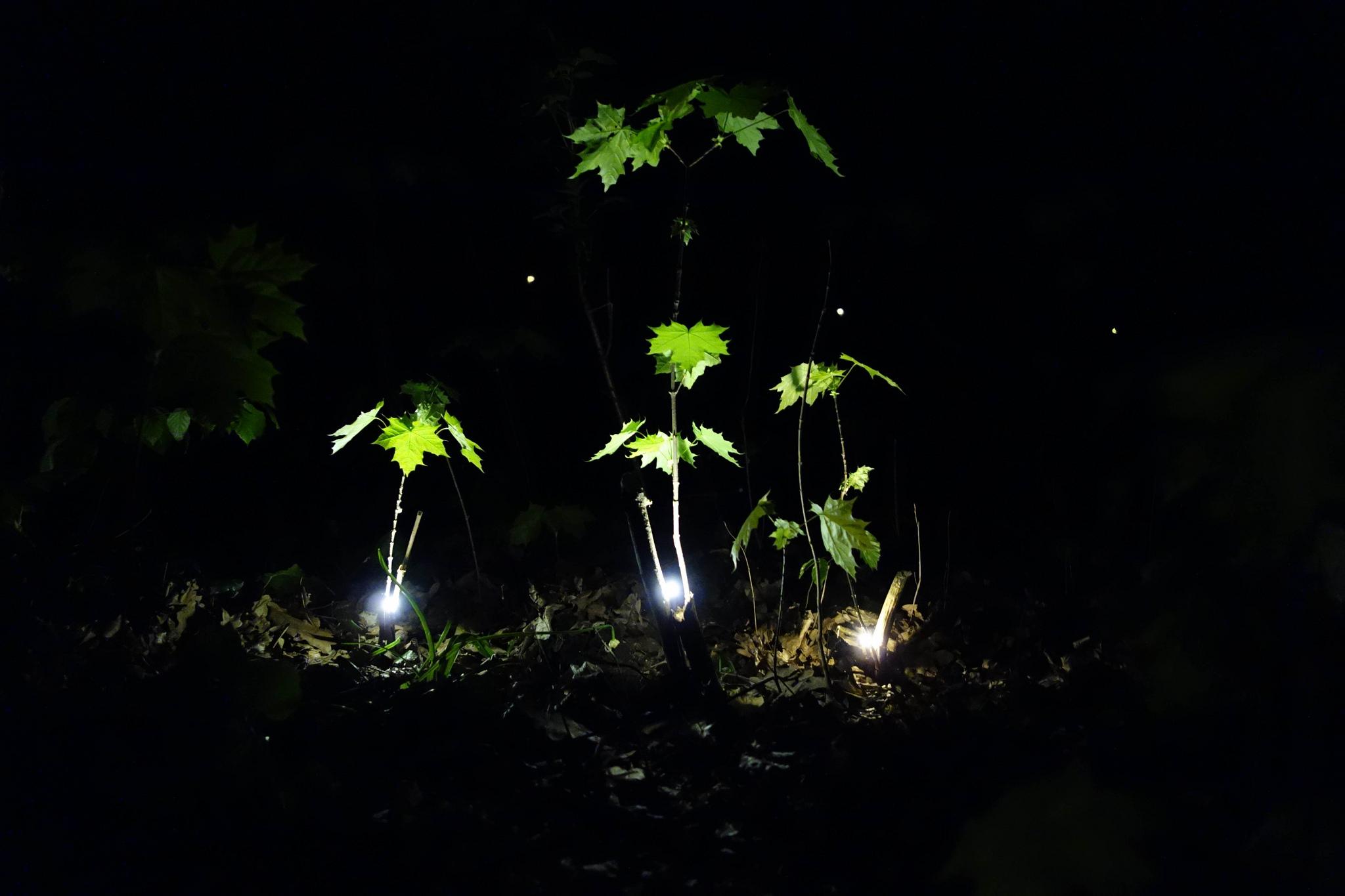 Lumière éclairant des pousses d'arbres.